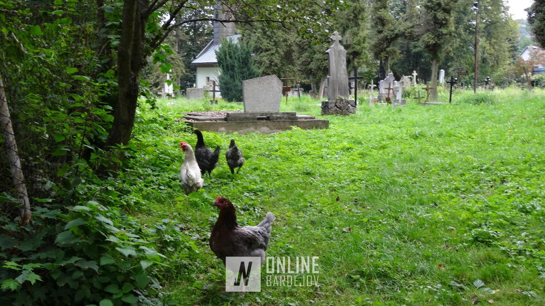 Po prečítaní oznamu, náš pohľad skončil na sliepkach...