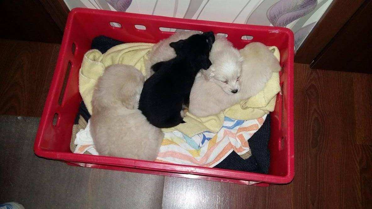 AKTUALIZOVANÉ: (17.09), Štyri vyhodené šteniatka na bardejovskom Mihaľove majú nových majiteľov!