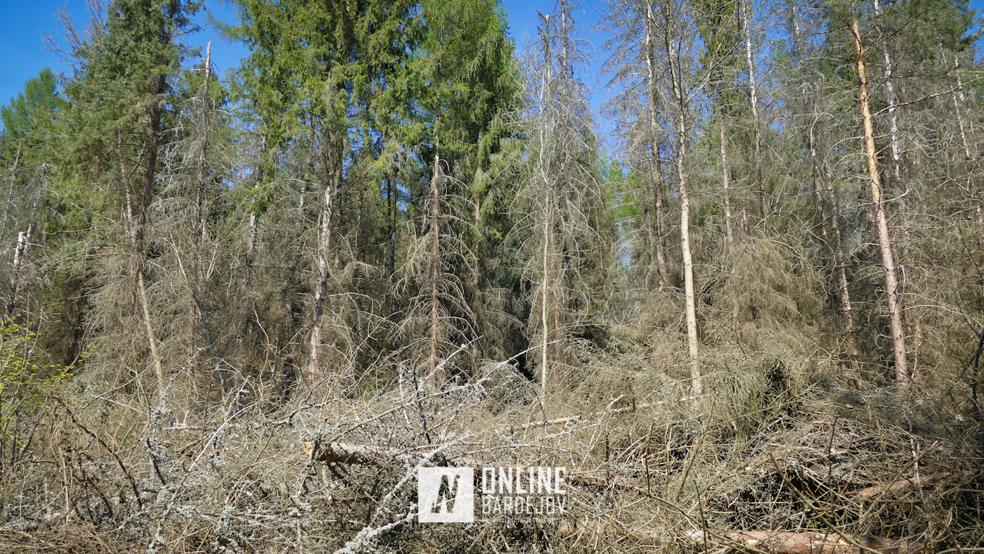 Rekreačný les turistického okruhu Ostrá hôrka je v dezolátnom stave!